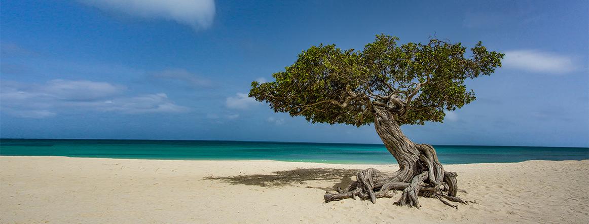 De Sociaal Economische Raad - Aruba